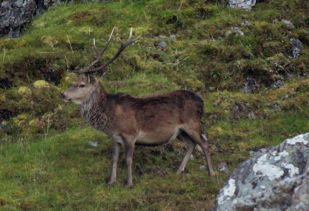 Red Deer - photo by Benjamin O Jones.
