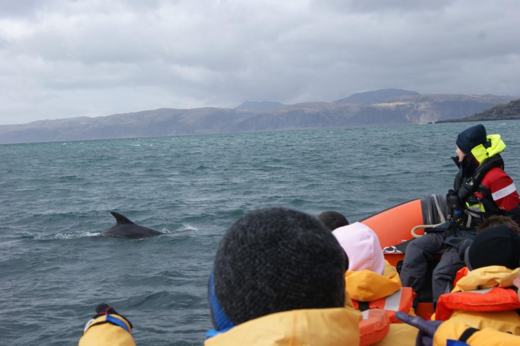 Crew member Sarah with dolphin.