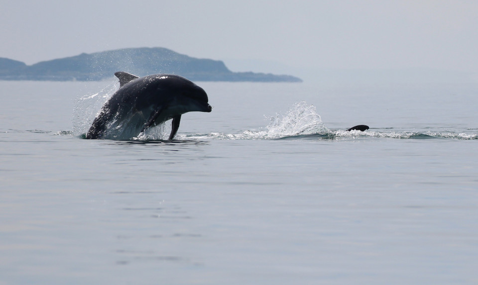Seafari Adventures - Bottlenose Dolphins