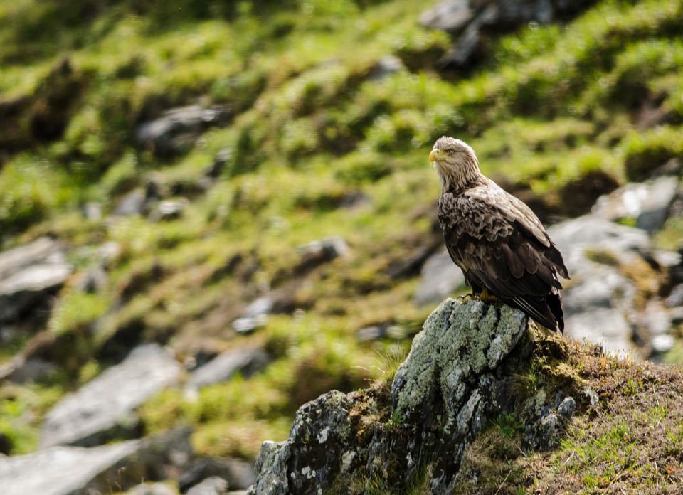 Seafari Adventures - Sea Eagle